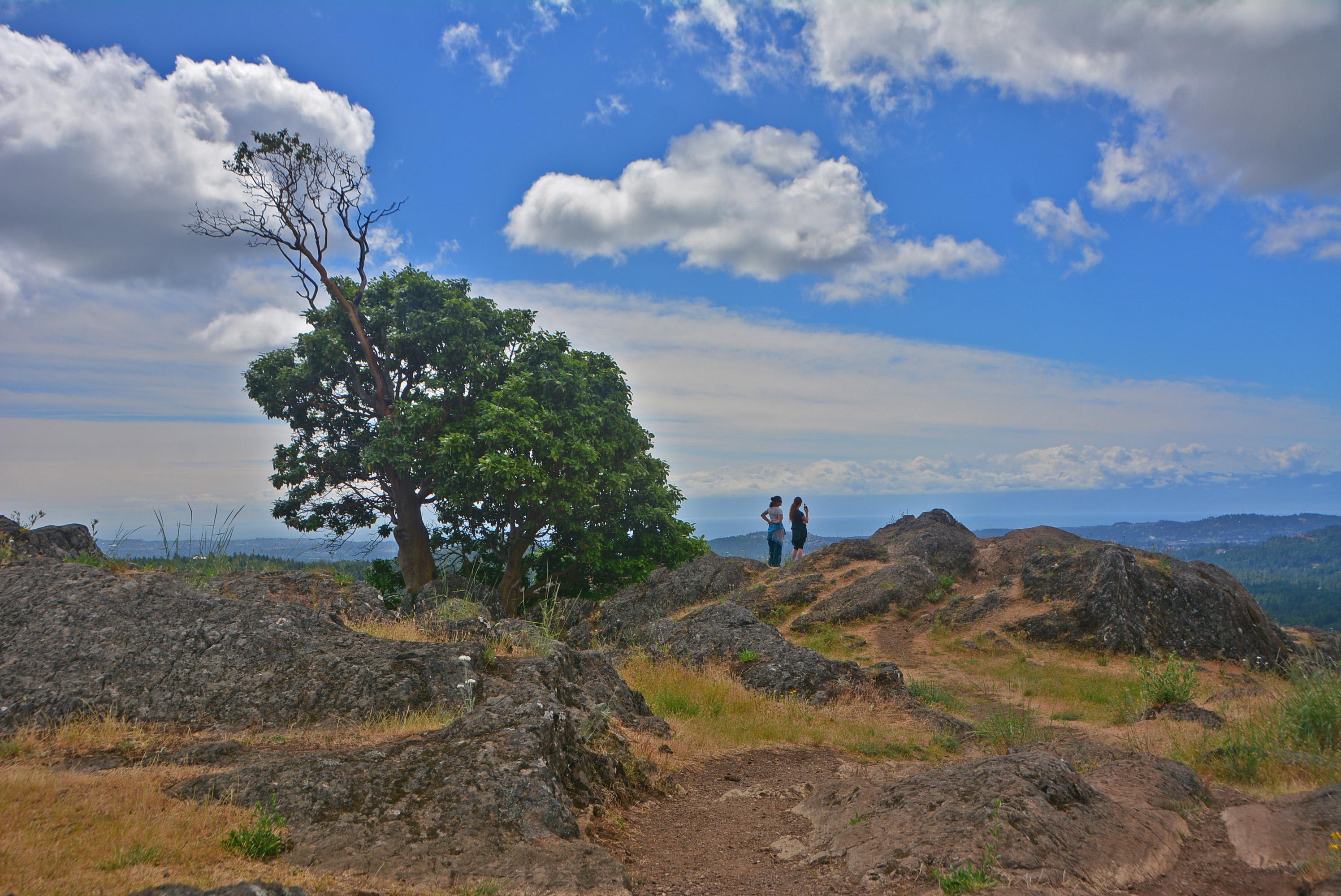 Lone Hill Tree